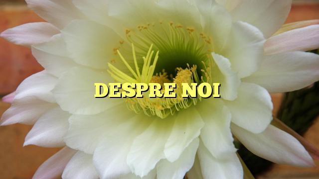 DESPRE NOI