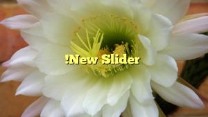 !New Slider